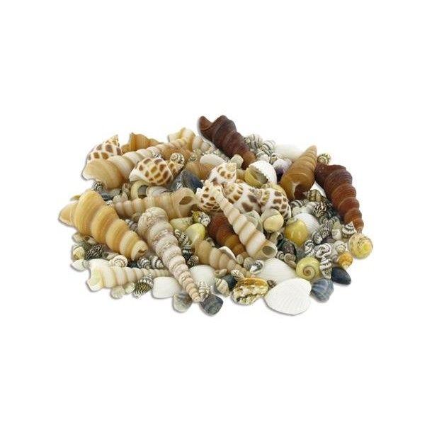 Sachet de 500g de coquillages naturels